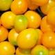 Petit oeuf citron