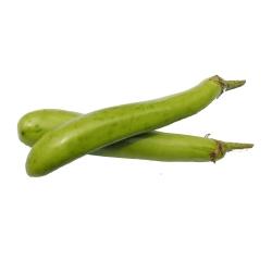 Plant d'aubergine Longue Thaï verte