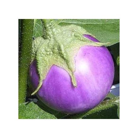 Lao Lavender